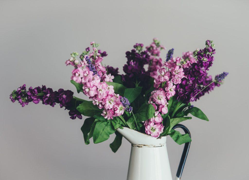 kwiaty-doniczkowe